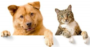 Dog or Cat; Which do you prefer as a pet?